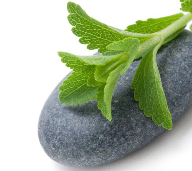 Stevia-CC-Tjall-Fotalia.jpg