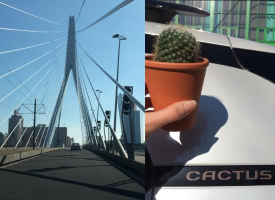 #Love4Cactus: Explore Rotterdam