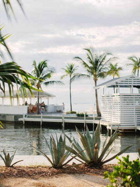 agave-island